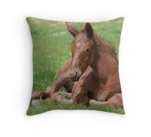 Premiere Pouliche Throw Pillow