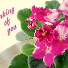 Thinking of You African Violet by AuntDot