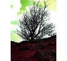 Artistic Tree 1 Photographic Print
