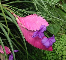 Blooming Bromeliad by Jayne Le Mee