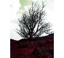 Artistic Tree 2 Photographic Print