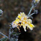 Frozen Flower by MarianaEwa