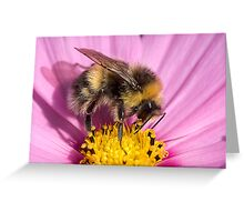 Bumble bee - Bombus lucorum Greeting Card