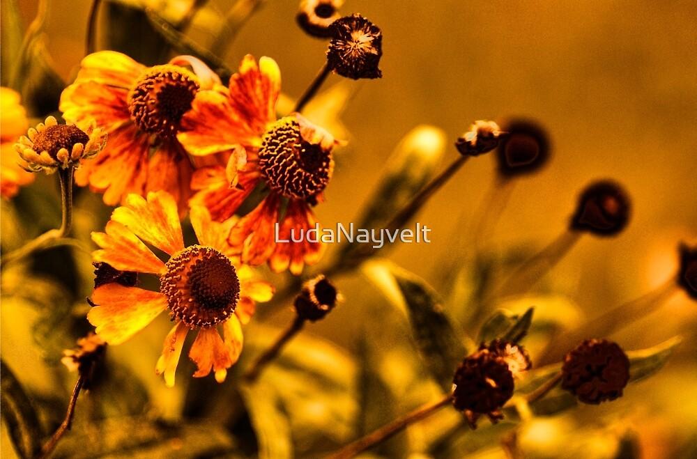 Осенние Цветы  (Autumn Flowers) by LudaNayvelt