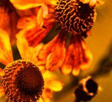 Осенние Цветы  (Autumn Flowers) Sticker