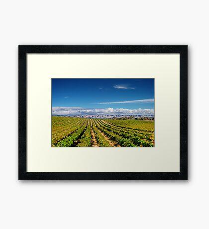 Mclean Vineyard Framed Print
