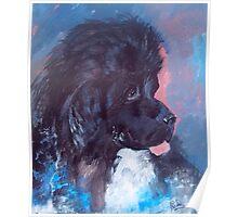 Portrait of Feeny, the Newfoundland Dog Poster