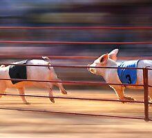 Pig Racing by Kelvin  Wong