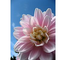 Baby Pink in a Blue Sky Photographic Print