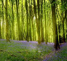 Barcodes And Bluebells by Nigel Finn