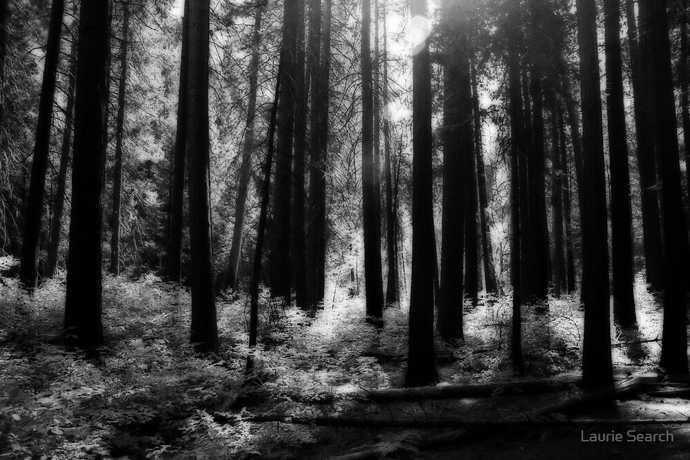 Forest by Laurie Search