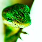 {lizard} by ashleyrouss