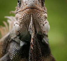 Green Land Iguana by becks78