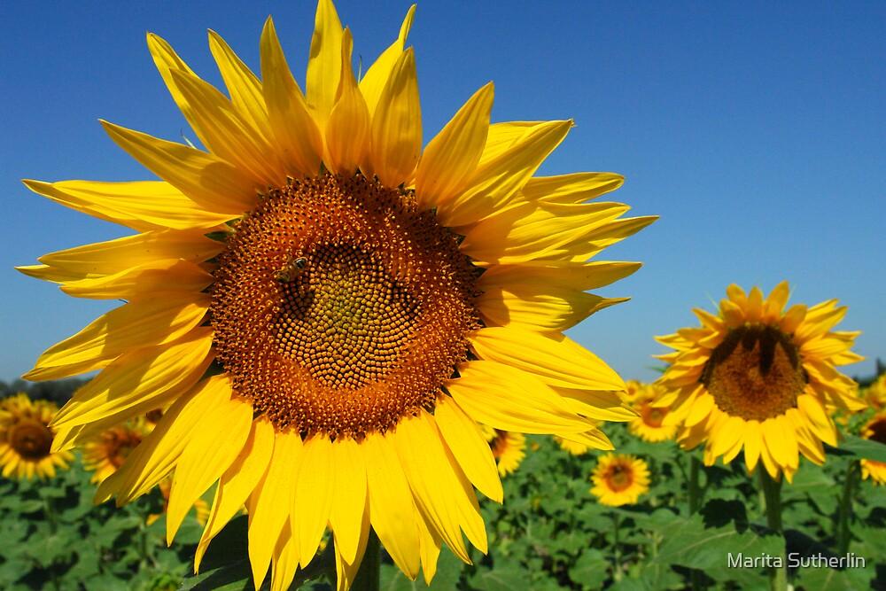 Sunshine of my Life by Marita Sutherlin