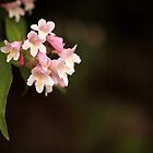 Pink Beauty by Tracy Friesen