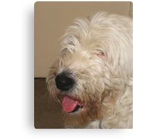 My House Guest Canvas Print