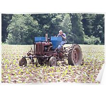 Tobacco Crop Will be Good This Year Poster