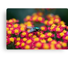 Red, Pink or Green? Canvas Print