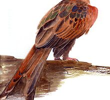 Red Kite by Maureen Sparling