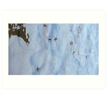 Water Strider riding the sky Art Print