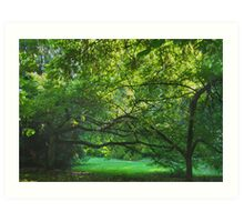 Emerald Balance--Washington Park Arboretum, Seattle Washington Art Print