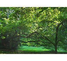 Emerald Balance--Washington Park Arboretum, Seattle Washington Photographic Print
