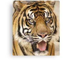 Tiger, beautiful Tiger Canvas Print
