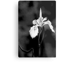 Wild Iris - Black & White Photo Painting Metal Print