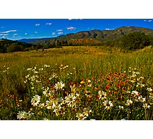 A Mountain Wildflower Paradise Photographic Print
