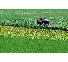 Green, Green, Field of Greens Photographic Print