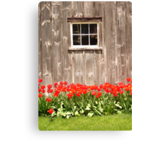 Red Tulips & Barn Canvas Print