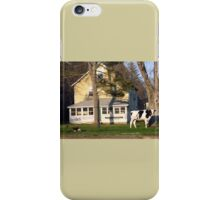 A Cow in The Front Yard with a Bedit iPhone Case/Skin