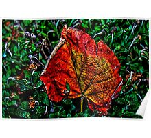 Autumn Leaves Fine Art Print Poster