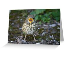 Little Mistle Thrush Greeting Card