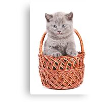 Funny gray kitten in a basket Canvas Print