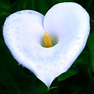 Arum Heart by mooksool