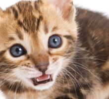 Funny ginger tabby kitten bengal Sticker