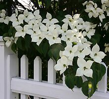 White Picket Fence by Jayne Le Mee