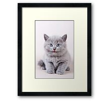Fluffy gray kitten British Framed Print