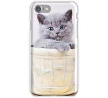 Fluffy gray kitten British in a vase iPhone Case/Skin