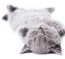 Funny gray fluffy kitten sleeps by utekhina