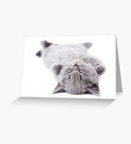 Funny gray fluffy kitten sleeps Greeting Card
