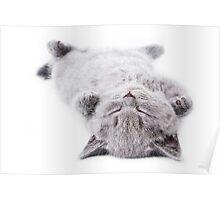 Funny gray fluffy kitten sleeps Poster