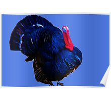 Be Thankful For Turkeys Poster