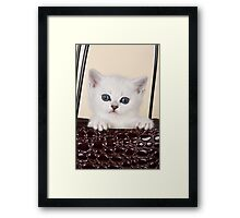 White British kitten with big eyes Framed Print