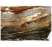 Peeling Paper-bark Poster
