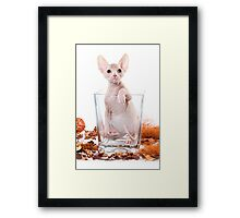 Funny sphinx kitten without hair Framed Print