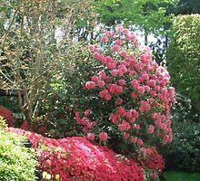 Introducing Leura Gardens~bd2 by Alex Gardiner