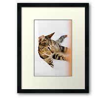 Brown Tab Framed Print