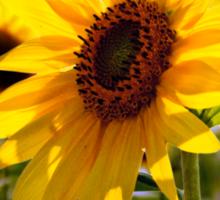 Sunny delight  Sticker